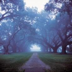 Early Morning Fog, Oak Alley Plantation; Vacherie, LA; 2000