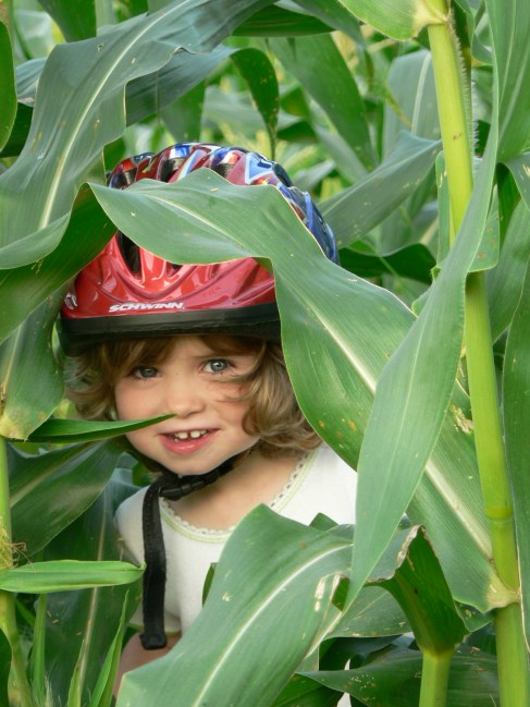 Corn Ciricullum 06 034