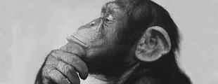 front_monkeysphere