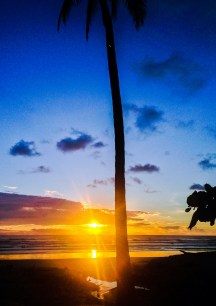 Guiones palm tree at sunset
