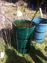 soak bare root trees for 2 hours prior to planting... 2 HOURS! (not overnight)