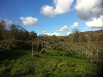 The beautiful BPT orchard