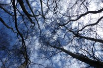 the branches against the sky (particularly like this one)