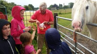 Feeding apples to the white horse (7)