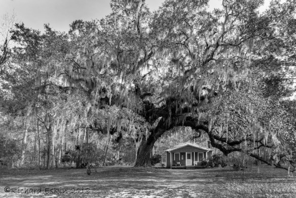 Ancient live oak and house on Daufuskie Island, SC.