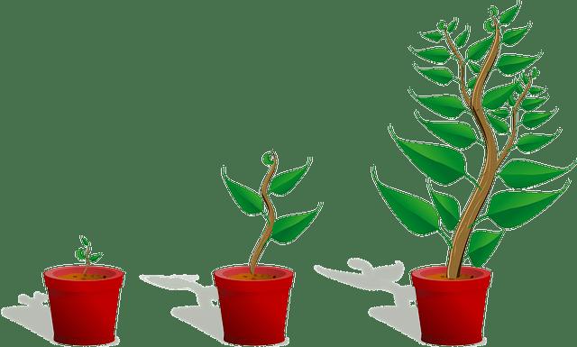 vos euros sont comme les plantes, il faut les faire grandir.