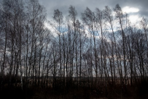 Belarusan forest