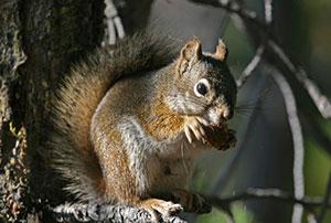 Quick Squirrel Exclusion