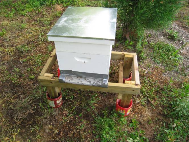 Each Time We Open The Hive Brush Ants And Eggs Away Clean Lid Completely Of Them Next They Re Back