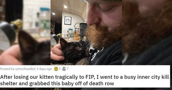 adopt adopted cats dogs kittens puppies aww cute heartwarming shelter rescue animals   bearded man cradling a black cat: After losing our kitten tragically to FIP, I went to a busy inner city kill shelter and grabbed this baby off of death row
