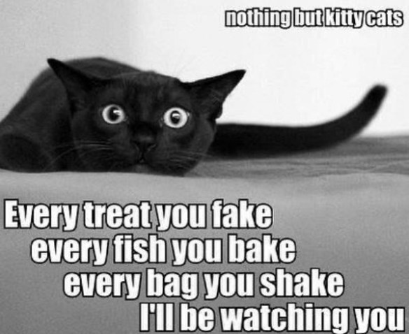 Cat - nothing but kittycats Every treat you fake every fish you bake every bag you shake Il be watching you