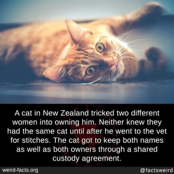 Sky - A cat in New Zealand tricked two different women into owning him. Neither knew they had the same cat until after he went to the vet for stitches. The cat got to keep both names as well as both owners through a shared custody agreement. weird-facts.org @factsweird
