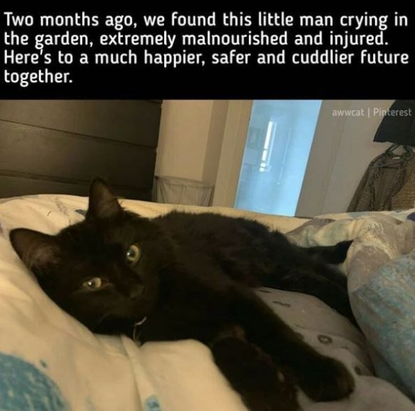 Cat - Two months ago, we found this little man crying in the garden, extremely malnourished and injured. Here's to a much happier, safer and cuddlier future together. awwcat   Pinterest