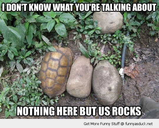 Tortoise - I DON'T KNOW WHAT YOU'RE TALKING ABOUT NOTHING HERE BUT US ROCKS Get More Funny Stuff @ funnyasduck.net