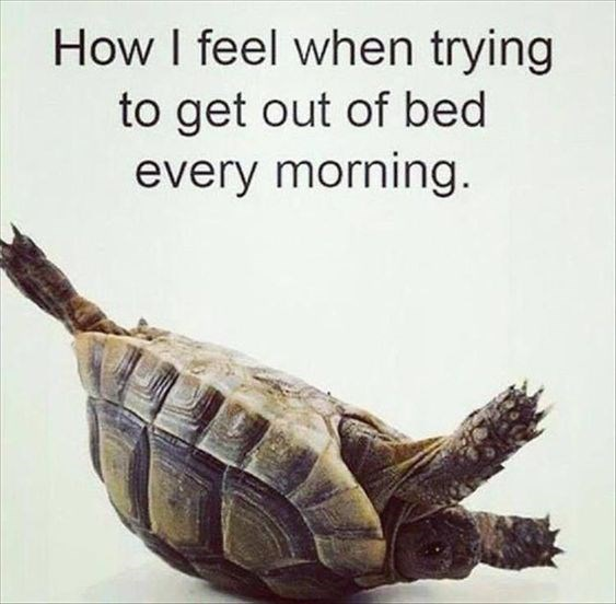 Turtle - How I feel when trying to get out of bed every morning.