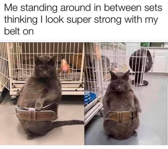 Cat - Me standing around in between sets thinking I look super strong with my belt on