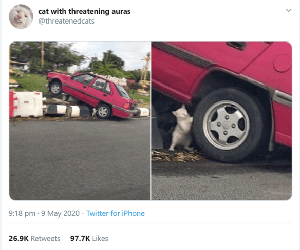 Transport - cat with threatening auras @threatenedcats 9:18 pm · 9 May 2020 · Twitter for iPhone 26.9K Retweets 97.7K Likes