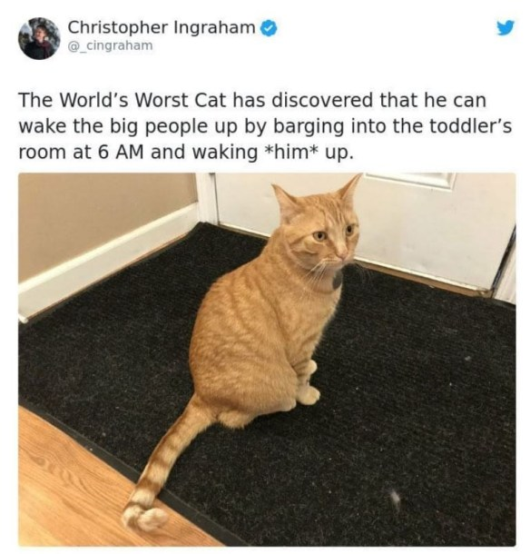 Cat - Christopher Ingraham @_cingraham The World's Worst Cat has discovered that he can wake the big people up by barging into the toddler's room at 6 AM and waking *him* up.