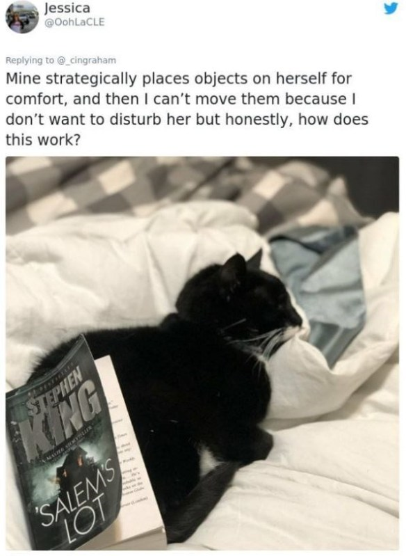 Cat - Jessica @OohLaCLE Replying to @_cingraham Mine strategically places objects on herself for comfort, and then I can't move them because I don't want to disturb her but honestly, how does this work? STEPHEN EMASTER STOEYMUIR SALEMS LOT