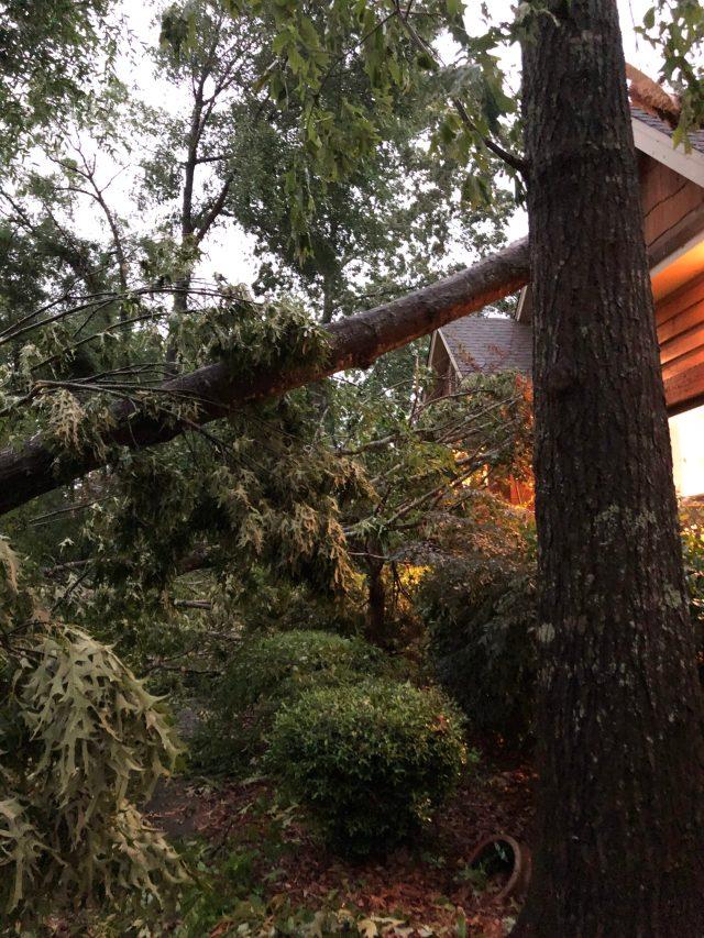 Prattville Tree Damage