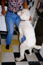 dog humping leg