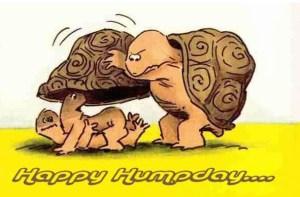 happy-hump-day-meme-of-turtles-vocabulario-en-inglés