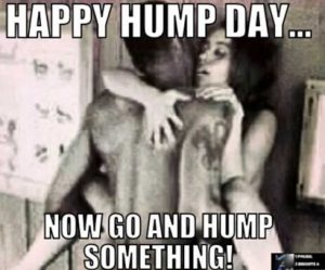 sexy-photo-meme-text-happy-hump-day-now-go-hump-something-vocabulario-en-inglés