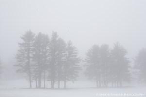 foggy reindeer