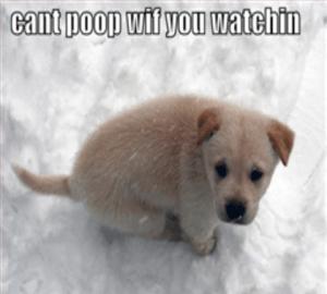meme of dog pooping: can't poop wit u watching