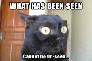 meme of cat with very wide eyes:what has been seen, cannot be unseen