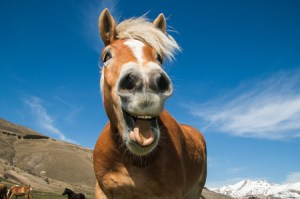 a horses mouth--straight from the horse's mouth--idiom