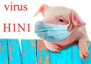 a picture of a pig wearing a surgical mask that represents the swine flu, aka h1n1--vocabulario en inglés