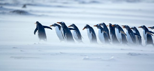 penguins-leader-1940x900_34162[1]