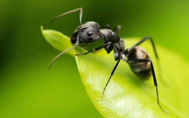 black_ant-1920x12001