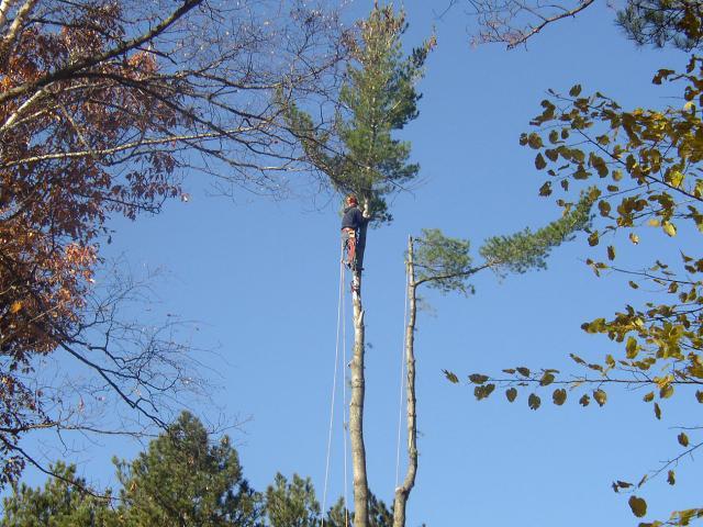 tree limbing rick gruel