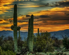 """Saguaro National Park, Arizona. 2nd prize winner in """"Prickly Plants"""" challenge and 3rd prize winner in """"Big Nature"""" challenge on international website Pixoto. Judge Commended in the """"Colorful Landscapes"""" challenge on Photocrowd.com. Recipient of 20 Peer Awards on website ViewBug."""