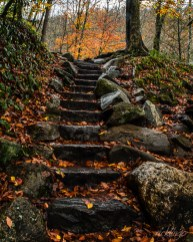 """Received first place Judge's Award in """"Stairway to Nature"""" challenge from the international website Pixoto. Judges' Commended for """"Your Favorite Shot"""" contest on Photocrowd. Official selection for the 2016 Montgomery Photo Contest. Also received 35 Peer Awards as well as Top 10% among over a half million submissions in the monthly photo contest from the website ViewBug. Honorable Mention in the color category at the 2018 Harvest Home Festival."""