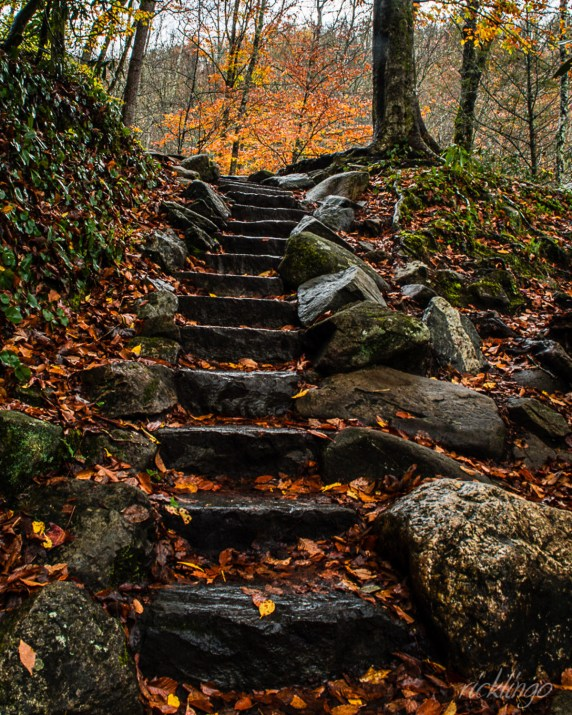 "Received first place Judge's Award in ""Stairway to Nature"" challenge from the international website Pixoto. Judges' Commended for ""Your Favorite Shot"" contest on Photocrowd. Official selection for the 2016 Montgomery Photo Contest. Also received 35 Peer Awards as well as Top 10% among over a half million submissions in the monthly photo contest from the website ViewBug. Honorable Mention in the color category at the 2018 Harvest Home Festival."