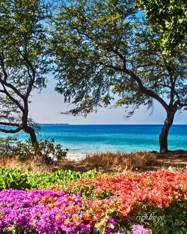 Springtime in Hawaii