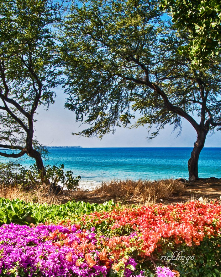 Springtime in Hawaii