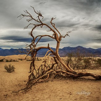 """Mesquite Dunes, Death Valley, California. 1st place for the day and 4th place for the week in """"Nature Up Close"""" on international website Pixoto. Also 2nd place in """"Dead Trees"""" and 3rd place award in """"Nature Photos"""" challenge on that website."""