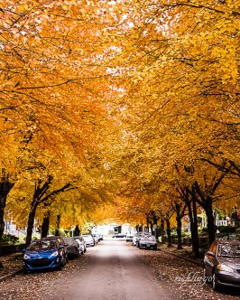 """3rd place for the day in """"City, Street, and Parks"""" on international website Pixoto."""