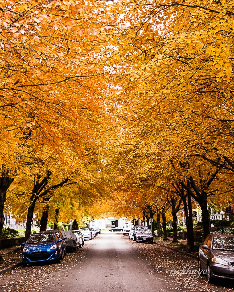 "3rd place for the day in ""City, Street, and Parks"" on international website Pixoto."