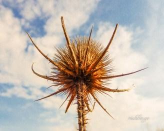 """Photo of the Day"" on capturecincinnati.com. 8th place award in ""Nature Up Close"" on international website Pixoto."