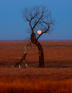 Dinosaur Tree, Flint Hills- Kansas
