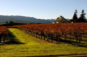 Napa Valley in the Fall