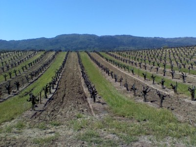 Rick Hammersley Walks by the Vineyards in Sonoma and Napa Valleys