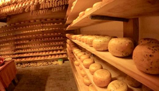 オランダ チーズ工場 訪問レポート 陽気なオランダ人がアテンドしてくれるアットホームな工場でした
