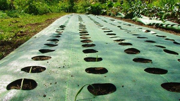 simple ideas garden weed barrier
