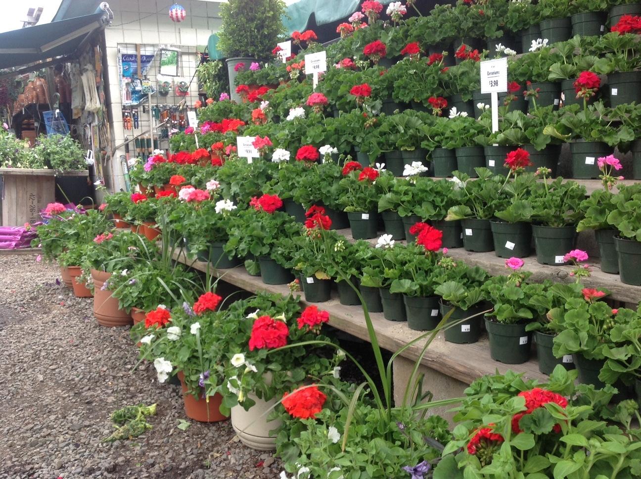 Garden U0026 Patio Plants